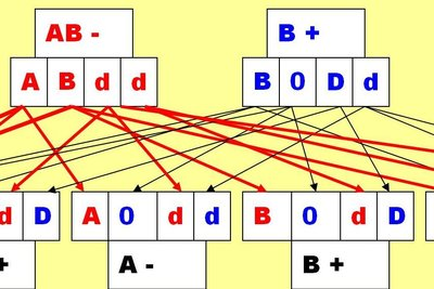 Blutgruppe der Mutter AB negativ - mögliche Blutgruppen