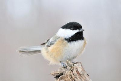 Vögel sind faszinierende Tiere.