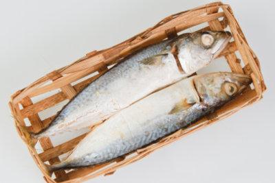 Fisch gehört zur Rohfütterung dazu.