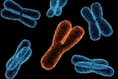 Hemizygotie tritt zumeist bei männlichen Geschlechtschromosomen auf.