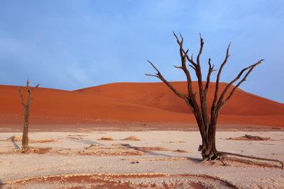 Die Wüstenbiene lebt in extremer Hitze.