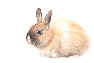 Kaninchen mögen im Winter auch Wärme.