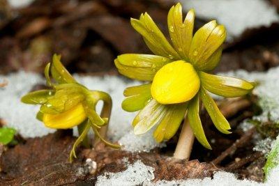 Blumen nur an frostfreien Tagen gießen.