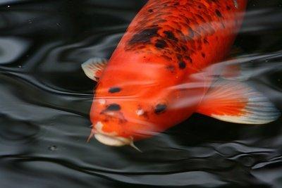 Algenfressende Fische sind eine gute Lösung.
