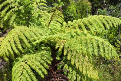 Neuseeland beherbergt noch viele schutzwürdige Pflanzen.