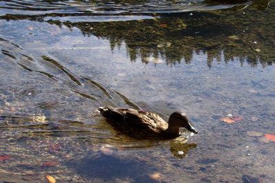 Enten können leicht Machkegel erzeugen.