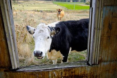 FarmVille-Benachrichtigungen deaktivieren Sie einfach.