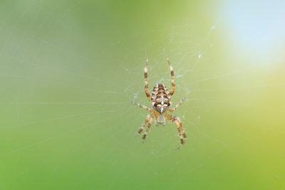 Spinnen gehören nach draußen.