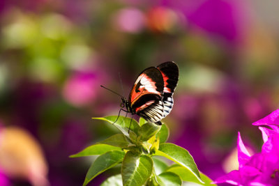 Schmetterlinge sind schön anzusehen.