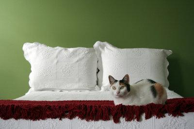 Wenn die Katze ins Bett pinkelt stimmt etwas nicht.