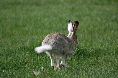 Verwenden Sie ein BunnyHop-Skript.
