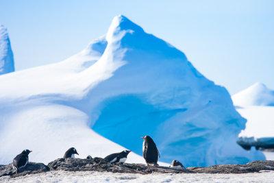Der Südpol ist ein unwirtlicher aber kein lebloser Ort.