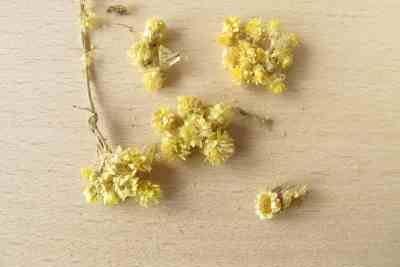 Getrocknete Strohblumen sind eine beliebte Dekoration.