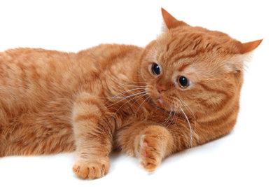 Eine kranke Katze, die sich ausruht
