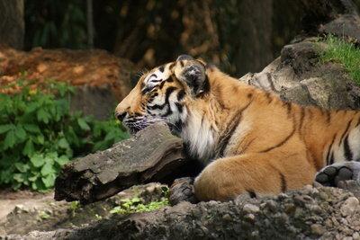 Zoo Tycoon macht Sie zum Zoobesitzer.