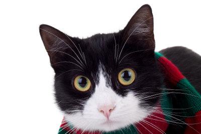 Die Katze miaut komisch bei einer Halsentzündung.