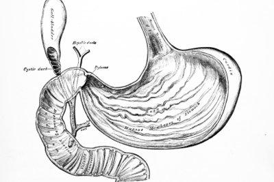 Eine gesunde Magenschleimhaut ist wichtig für den Magen.