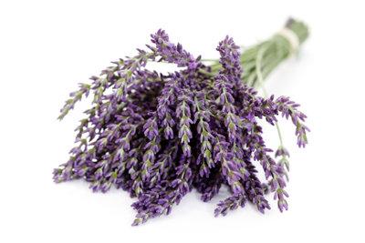 Lavendel können Sie trocknen und weiterverarbeiten.