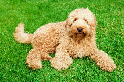 Hunde brauchen regelmäßig eine Wurmkur.
