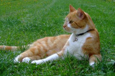Selektionsdruck heißt bei Mäusen, der Katze zu entkommen.