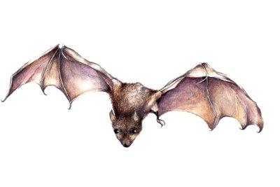 Kreieren Sie sich zu Halloween Ihr eigenes Fledermaus-Kostüm.