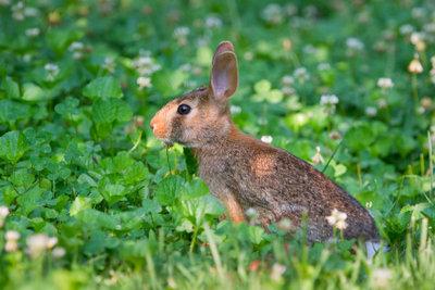 Ein Kaninchenbau im Garten kann sogar Gebäude zum Einsturz bringen.