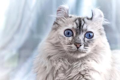 Auch Katzen können unter einer Stressblase leiden.