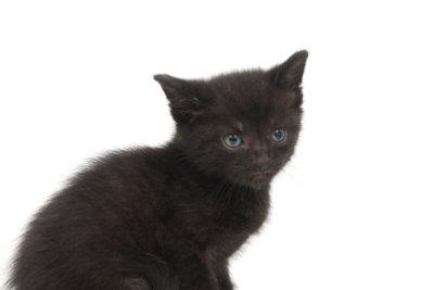 Soll Unglück bringen: eine schwarze Katze von links.