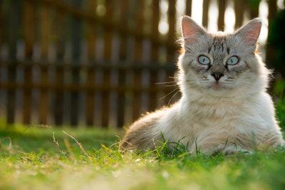 Im Katzenfreilaufgehege genießen die Tiere Freiheit.