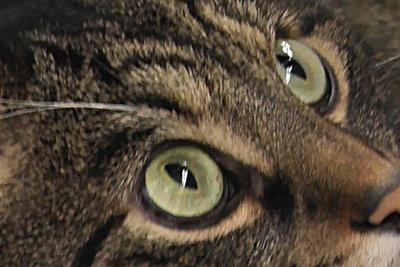 Katzen beobachten ihre Umgebung.