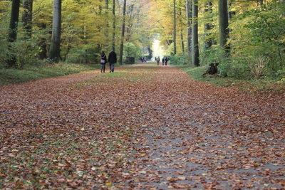 Im November mit Kindern im Wald sammeln.