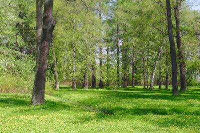 Baumdoktoren pflegen Bäume im städtischen Raum.