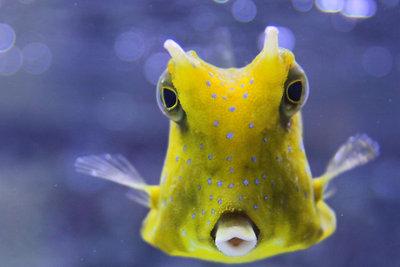 Die Unterwasserwelt und ihre Ursprünge.