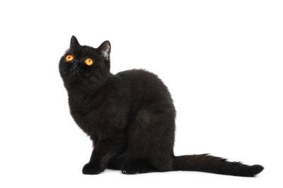 Nur nachts sind alle Katzen grau.
