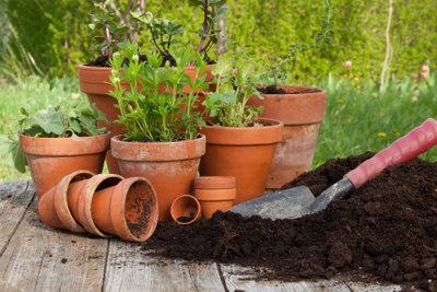 Pflanzen brauchen einen guten Nährboden.