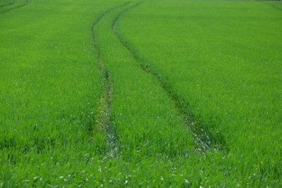 Marktorientierte Landwirtschaft bringt den Landwirten Vorteile.