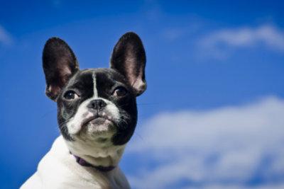 Hunde können auch Ultraschall noch hören.