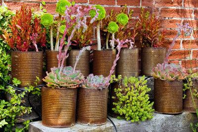 Schützen Sie Ihre Pflanzen vor Wollläusen.