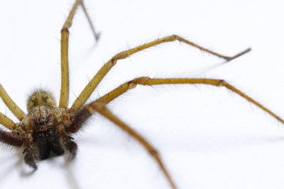 Spinnen können Sie einfach fangen.