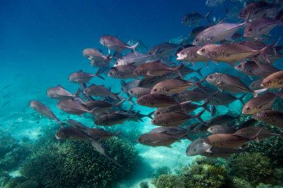 Fische fallen bei hohen Temperaturen in eine Wärmestarre.