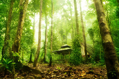 Belebte Natur besteht aus Kohlenstoff.