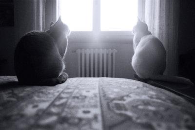 Auch die Katzen mögen es warm.