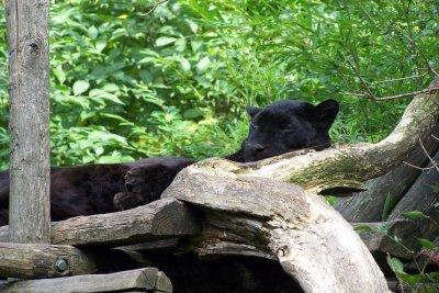 Jede schwarze Katze kann Panther genannt werden.
