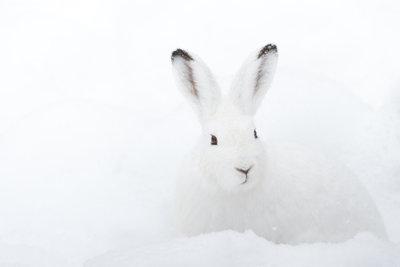Kaninchen sind beliebte Kragenbesätze.