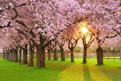 Im Frühjahr und Sommer blühen die einheimischen Bäume.