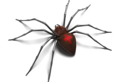 Mit einer Spinne unter der Haut wird Halloween besonders gruselig.