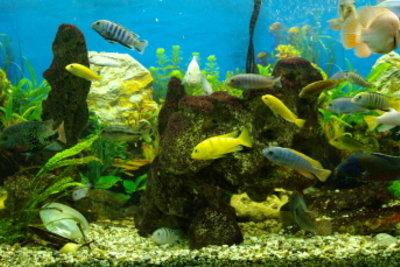Das Gewicht von Stein und Sand darf bei Aquarien nicht zu hoch sein.