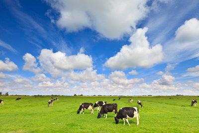 Viele der Bauernhöfe, die es in Deutschland gibt, sind gewachsene Großbetriebe.