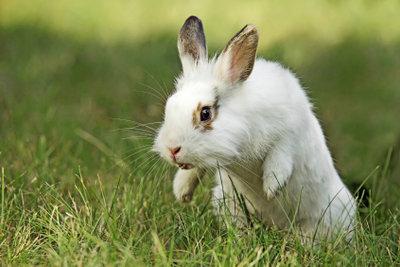 Kaninchen mögen Wirsing und frische Kräuter.