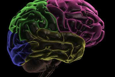 Das menschliche Gehirn steuert sämtliche Funktionen in Ihrem Körper.